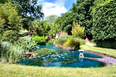 A garden pond treated with SGP Blue. Using pond dyes to control algae is both cost effective and reliable