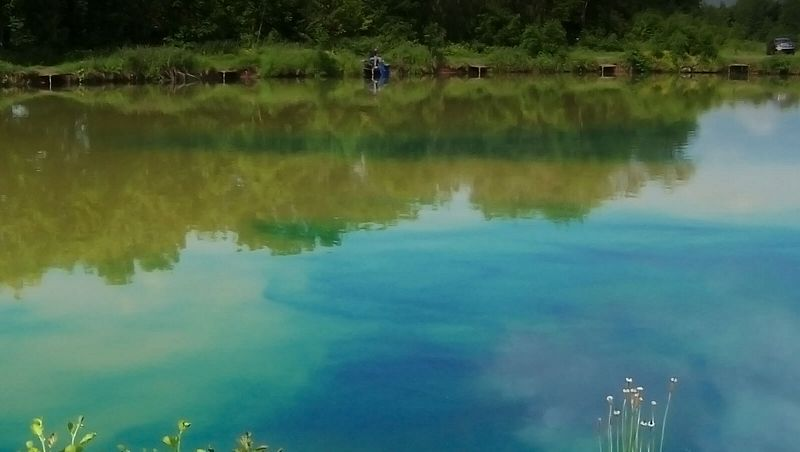 A lake being treated with Dyofix Pond Blue dye for lakes